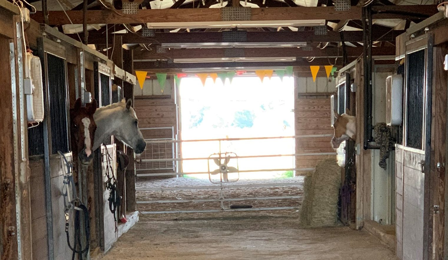 Horses in a stable at 380 Ranch